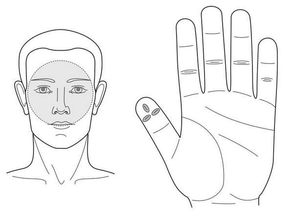 Рис. 86. Семянотерапия при воспалении лобной и гайморовых пазух носа